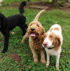 Puppy at Play