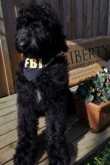 Oddle FBI
