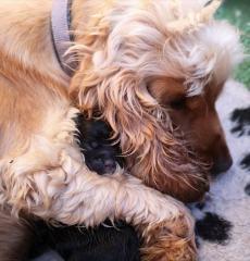 Puppy  Oddle Cuddles