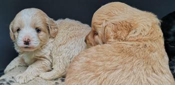 Puppy bundles